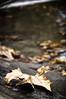 sintesi autunnale (swaily ◘ Claudio Parente) Tags: autunno autumn foglie foliage swaily claudioparente nikon d300 avezzano