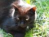 Meister KOCIO (arjuna_zbycho) Tags: felix blackcat tuxedo tuxedocat kater hauskatze cat animal cute animals pets gato kitten feline kitty kittens pet tier haustier katzen gattini gatto chat cats kocio