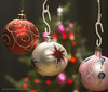 Starry lights (kimbenson45) Tags: christmas christmastree xmas baubles bok closeup colorful colors colourful colours decorated decorations differentialfocus green lights ornaments pink red seasonal shallowdepthoffield snowflake stars white