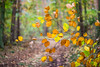 Herbstbild (photalena) Tags: landscape trees green yellow vintagelenses nature leaves fall colourful dof bokeh herbst