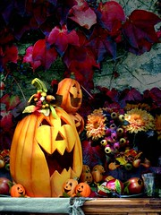 Dolcetto scherzetto (lucy PA) Tags: halloween zocca fiori autunno autumn holiday pumpkin flowers