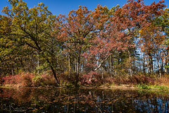 Fall at Holler Pond(Explore 10/30/17) (CJ Schmit) Tags: wwwcjschmitcom 5dmarkiii canon canon5dmarkiii cjschmit cjschmitphotography tamronsp2470mmf28divcusdg2 photographermilwaukee milwaukeephotographer photographerwisconsin racine racinephotographer milwaukee mke wisconsin fall autum trees pond water park hollerpark hollerpond sunny colors fallcolors leaves bluesky red green orange on1 outdoors