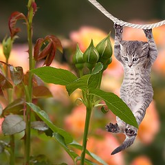Just Hanging Around (Scott 97006) Tags: cat kitten rope bokeh plant rosebuds cute strung
