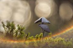 Arco iris (raulgranados) Tags: setas bokeh luz aberracion campo helios