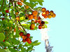 Sintra '17 (faun070) Tags: sintra portugal strawberrytree
