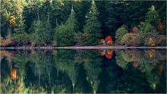 autumn glory (marneejill) Tags: red green autumn reflections cameron beach