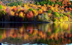 Tranquil balances of light and life (Captions by Nica... (Fieger Photography)) Tags: forest fall autumn trees tree nature branches water landscape lake reflections reflection quebec canada outdoor serene ducks colorful colors