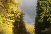_DSC1998_DxO (Alexandre Dolique) Tags: d850 nikon bourgogne beaune vignes terre dor haute côte arc en ciel rainbow