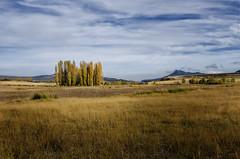 Paisaje dorado - Golden landscape (jmpastorg) Tags: paisaje landscape dorado oro gold golden otoño autumm murcia moratalla camposanjuan nerpio 1750 nikon noviembre 2017 españa spain