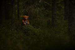 Lost (Explored) (thobia_s - https://twitter.com/thobia_s - thobiasp) Tags: flash sigma nikon hahnel teddybear teddy