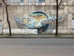 Turtle (aestheticsofcrisis) Tags: street art urban intervention streetart urbanart guerillaart graffiti postgraffiti buenos aires bsas argentina la boca barracas