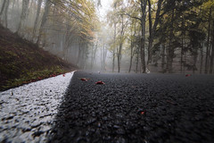 (matdur69) Tags: matdur69 matdur bosco nebbia strada fog street trees