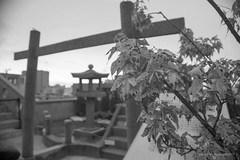 WDSC_3935-7W (Absurd Life as Sisyphus') Tags: 台南 林百貨 府城 古蹟 神社