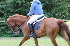 _MG_5877 (dreiwn) Tags: ridingarena reitturnier reiten reitplatz reitverein reitsport ridingclub equestrian showjumping springreiten horse horseback horseriding horseshow pferdesport pferd pony pferde tamronsp70200f28divcusd