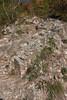 DSC01831 (cassolclaudio) Tags: montagna ferrata rio secco trento