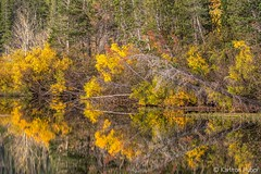Fall Colors - Morning Reflections (www.karltonhuberphotography.com) Tags: 2017 abstract autumn california calm chaos colorful details easternsierra fallcolors fallcolorstrip forest horizontalimage karltonhuber lake lakeshore landscape mammoth mammothlakescalifornia mirrorlike monocounty morninglight nature outdoors peaceful reflections trees twinlakes water wildplaces