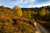 Autumn Colours- Devils Punchbowl (Morgan Masters photography) Tags: autumn colors colour colorfull colourfull color trees tree woodland heath heathland heather nature naturalengland landscape england surrey devils punchbowl track path natural orange red glow sky