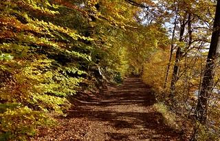 Germany, Herbst rund um den Bärensee bei Stuttgart, 75625/9096