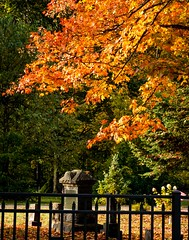 Happy Halloween . . . (Dr. Farnsworth) Tags: cemetery halloween scary maple tree orange leaves fernridge mi michigan fall october2017