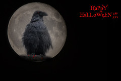 HaPpY HaLLoWeeN! (NicoleW0000) Tags: happy halloween raven bird spooky moon photoshop