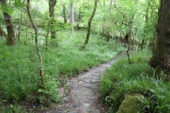 IMG_3169 (avsfan1321) Tags: connemaranationalpark connemara nationalpark ireland countygalway green lush landscape plants
