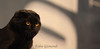 @ THE CONTEST (fabiogis50) Tags: cat cats animals gatti contest black pet pets
