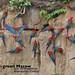 Red-and-green Macaw, Ara chloropterus