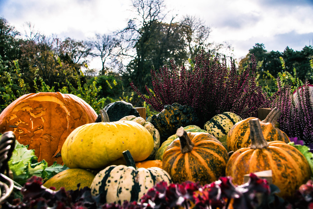 Halloween by Maria Eklind, on Flickr