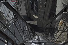 steep ladders 2 (punkbirdr) Tags: api audy birds birding d7100 nikkor24mmf28af ecuador punkbirdrphoto quito