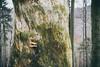 Stužica (MattusB) Tags: stužica stuzica forest old national park poloniny np narodny padnute stromy priroda nature huby hrib hríby mushrooms fallen tree decompose very slovaka nova sedlica kremenec ua sk pl border karpaty sony a6000 mirrorless hiking trail deep color autumn jesen list leaf leafs untouch touch pz 18105mm f4 lens zoom g