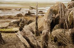 the great nothing (Mo Vidal) Tags: tide tideland lowtide ebbe meer coast küste ocean outdoor drausen detail sommer sonyalpha spanien farbe steine stones treibholz angeschwemmtesholz driftwood wood holz galicia rocks
