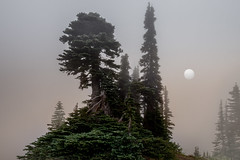 Island in the Sky (Bernd Thaller) Tags: mountrainiernationalpark washington usa mtrainier trees tree fog mist sun strange pale cool outdoor sky forest wood
