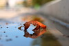 Autumn is here... (Michael Kalognomos) Tags: reflection autumn orange leaves gold dof bokeh snfccstavrosniarchosfoundationculturalcentre depthoffield ef24105mmf4l canoneos5dmarkiii water athens greece