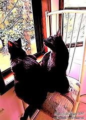 Sam and Dean Enjoying the Day (CopperScaleDragon) Tags: sam dean cats kittens feline adoption painnt brothers