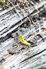 Grasshopper (rikhard.kuutti) Tags: green grasshopper grey log telephoto zoom telezoom bokeh detailed wood insect austria kaprun nature orthoptera caelifera