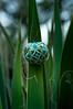 Dubno-0669 (FrankivFOto) Tags: pysanky etnic folk ornamental eggshell