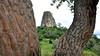 Torre de Pedra (Osvaldo Natal Forcelli) Tags: brasil brazil torre torredepedra castelo branco rodovia sp sãopaulo árvore madeira textura
