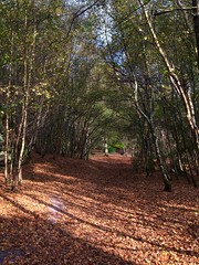 A walk in the woods (jeanettewhitmarsh) Tags: lakewood autumn woodland