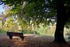 Bank unterm Herbstbaum (leaving-the-moon) Tags: 2017 201710 autumn baum bäumemalen goodlight herbst kraichgau natur nature season tree trees