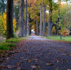 my way... (vreny_) Tags: way autumn nature weg baum tree blätter laub blatt herbst natureshot landscape landschaft farben colors fuji xt2 austria outdoor magic atmosphere wald bäume