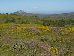 P9160327 West Coast National Park Flowers (Joanna P Dale) Tags: westcoastnationalpark flowers scenery southafrica omdem1 mk1 olympus 35mmzuiko 35mmmacro