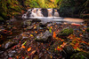 Fallen Leaves (peter_beagan) Tags: autumn leaves water waterfall woods forest longexposure rocks moss colour canon canon70d formatthitechfilters ireland irishautumn antrim glenariff sigma 1020