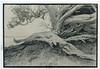 Lith (fawcetownsley) Tags: film hp5 diy blackandwhite bw print l39 newzealand tree ilford 400asa agfa brovira kodalith darkroom developer fixer fsu russian wideangle westoneuromaster russar 20mm schwarzweiss screwlens