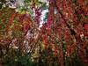 Magie d'autunno (onDa8) Tags: autunno magia colore pensiero occhi cuore