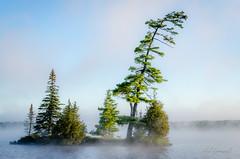 Stately Beauty (Neil Cornwall) Tags: 2017 algonquin canada macintoshlake ontario september camping canoeing mancamp