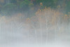 Sinnemahoning (popago) Tags: forest autumn sinnemahoning sycamore trees ethereal misty travel pennsylvania