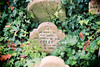Pet Sematary, Hyde Park (puppyhand) Tags: pet pets cemetery grave graves graveyard london england hyde park autumn 2017 headstone tombstone gravestone royal parks private dead death memory our good faithful dog peter friend 1901 white ivy leaf leaves green
