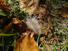 2017-09-18-11367 (vale 83) Tags: autumn nokia n8 coloursplosion colourartaward friends flickrcolour beautifulexpression autofocus feather leaves macrodreams