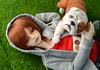 Simon and Sebastian (Fenekdolls) Tags: dollzone ro bjd doll bulldog felting