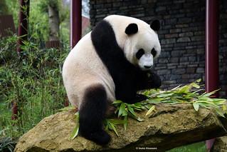 Bad, bad panda! Come on. We want photos.